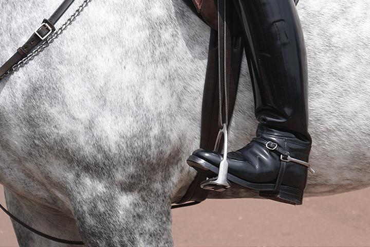 Horse_Main
