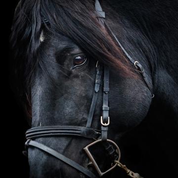 Horse_Shop_Brand_Image_12
