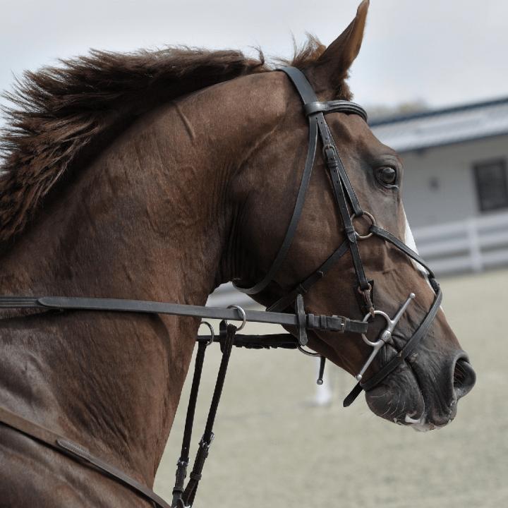 Horse_Shop_Brand_Image_2